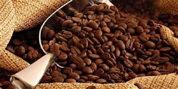 فروش عمده دانه قهوه روبوستا