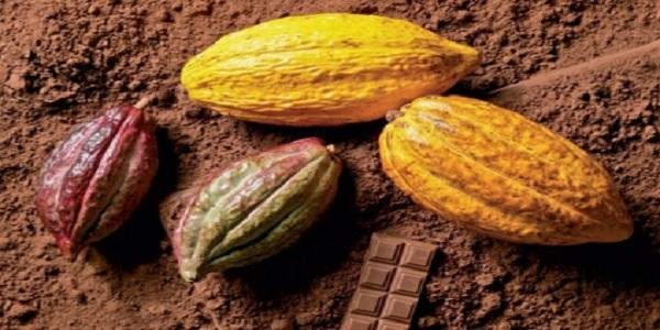 خرید پودر کاکائو خالص