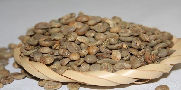 مرکز پخش دانه قهوه روبوستا
