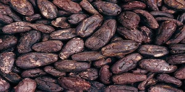 امکان واردات مستقیم و سفارشی دانه خام کاکائو