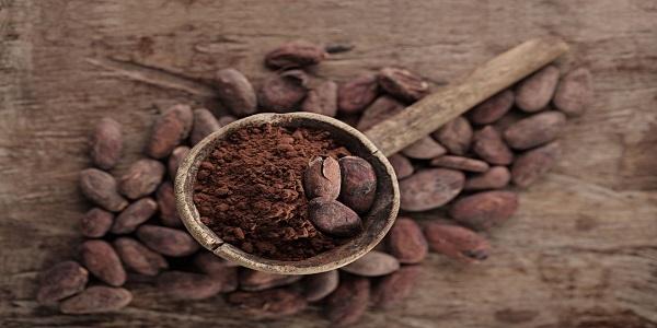 فروش مخصوص پودر کاکائو تولید کننده ها
