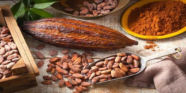 پودر کاکائو تولید شکلات